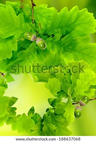 image of oak leaves closeup - stock photo