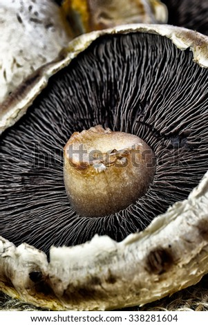 Image of old decaying flat mushrooms with grunge and hdr effect - stock photo