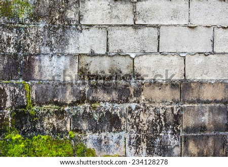 image of old mossy wall on day time . - stock photo