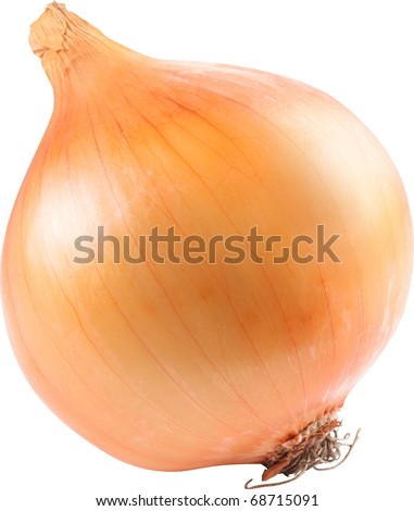 Image of onion on white background. The file contains a path to cut.