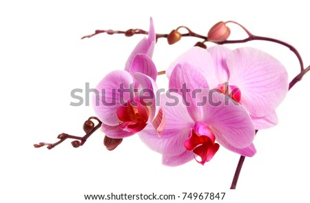 Image of orchid flower isolated over white - stock photo