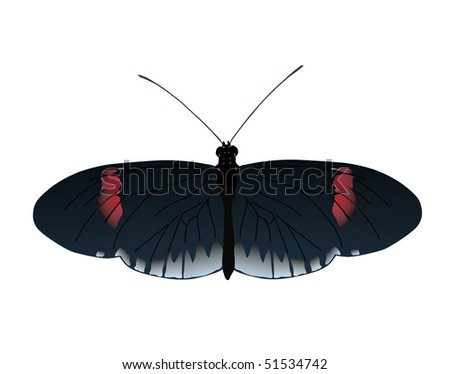 Image of Postman butterfly of Ecuador. Vector image also available