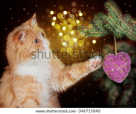 Image of red cat playing with Christmas decorations hanging on a Christmas tree on a festive background - stock photo