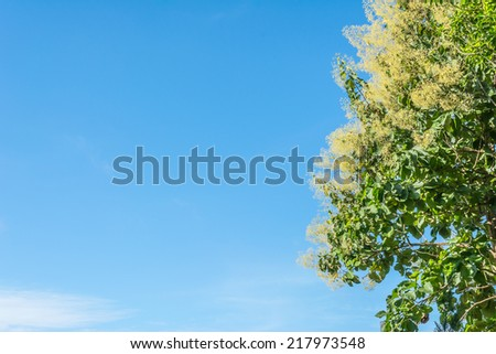 image of roll of tree and blue sky . - stock photo