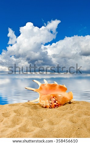 image of seashell on sky and water background