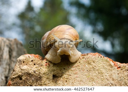 image of snail in the garden close-up