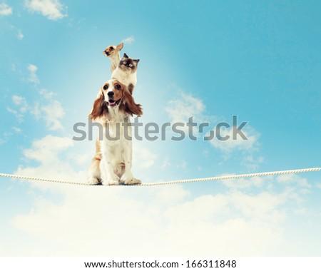 Image of spaniel dog balancing on rope - stock photo