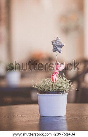 Image of star in pot, blur background - stock photo