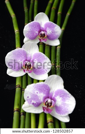 image of the spa concept �three orchid, bamboo grove