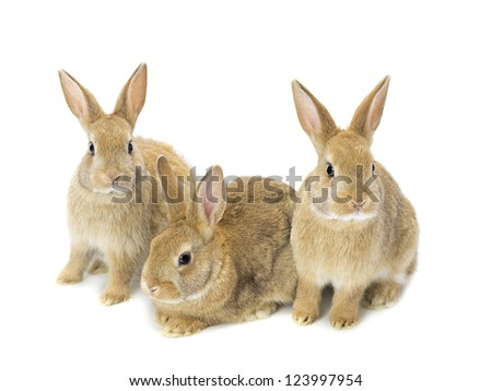 hare and rabbit family stock photos images pictures shutterstock. Black Bedroom Furniture Sets. Home Design Ideas