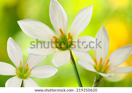 image of three flowers on a yellow background closeup - stock photo