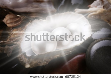 Image of three pearls in the shell on wet pebbles. - stock photo