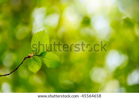 Image of twig with three fresh green leaves in a forest - stock photo