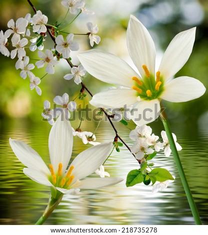 image of two beautiful white flowers on a background of water - stock photo