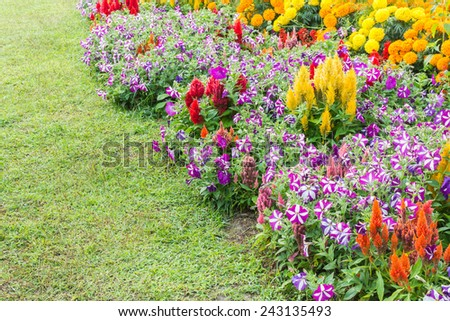 image of Various color flower background wall.