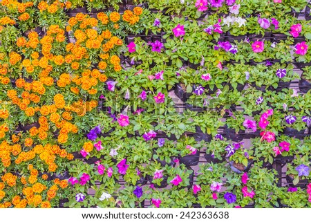 image of Various color flower for background usage. - stock photo