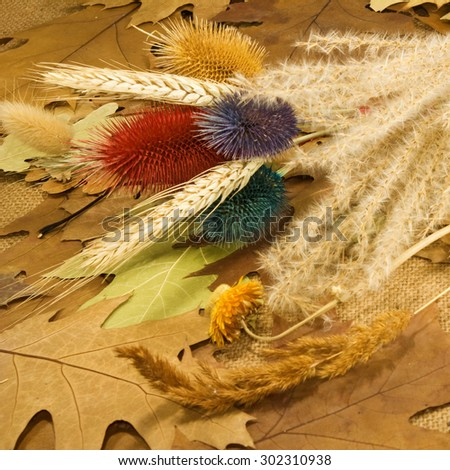 Image of various dried plants closeup - stock photo