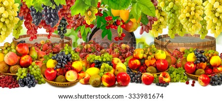 image of various ripe fruits in the garden close-up - stock photo