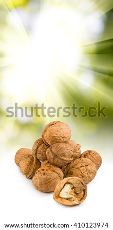 image of walnuts on the sun background  - stock photo