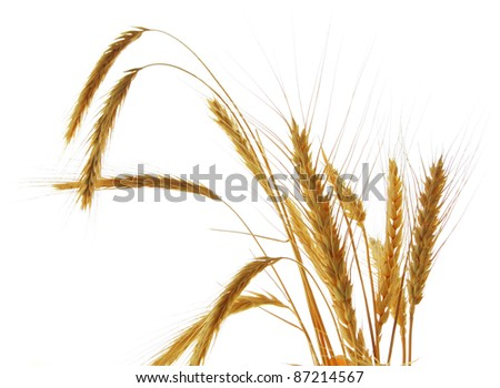 Image of wheat isolated over white background
