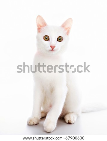 Image of white cat decorated with red ribbon over white background - stock photo
