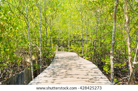 Image of Wooden bridge into mangrove forest on day time ,Thailand .
