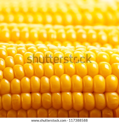 Image of yellow corn background, healthy organic food, bio nutrition, fresh ripe vegetable, maize cob, golden textured wallpaper, autumn harvest season, vegetarian eating and diet concept - stock photo
