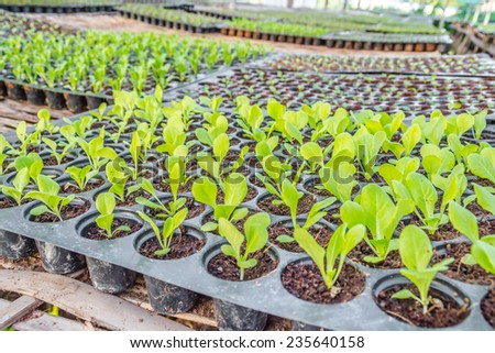 image of Young seedlings plants in tray . - stock photo