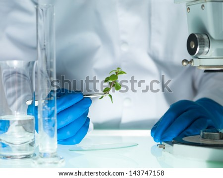 image showing a person's hands in blue rubber glove holding a small leafy plant with tweezers next to a microscope and laboratory glassware - stock photo