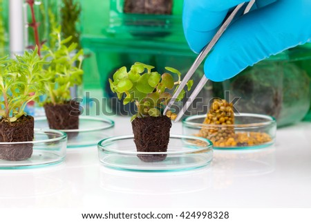 image showing a person's hands in blue rubber glove holding a small leafy plant with tweezers next tn the laboratory