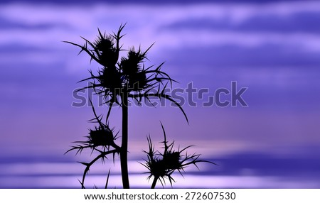 Image with color effect of thistle flowers on skyline at sunrise - stock photo