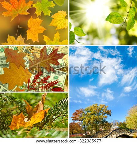 images autumn landscapes close-up