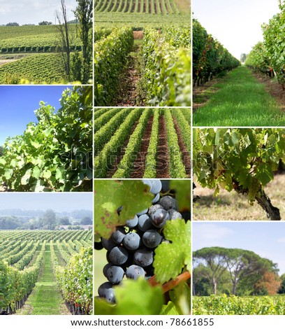 Images of a vineyard - stock photo