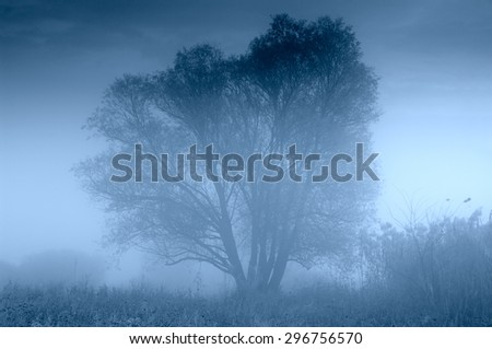 images of trees in the fog