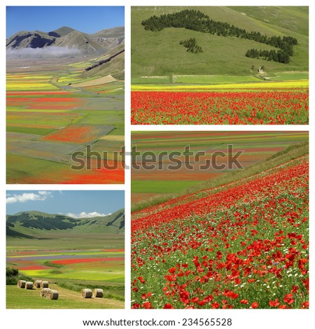 images with colorful flowery fields,  Castelluccio di Norcia ,Italy - stock photo