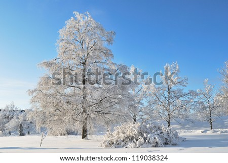 Imatra, Finland. Beautiful winter park with snow-covered trees