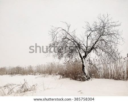 Imitation Of The Old Masters. The capture of lonely snowy tree in the suburb field (Rivne, Western Ukraine).