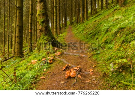 Impression of the GR5 trail in the Benelux