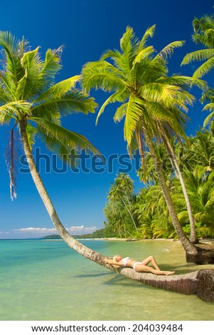 In a Coconut Grove Idyllic Holiday  - stock photo