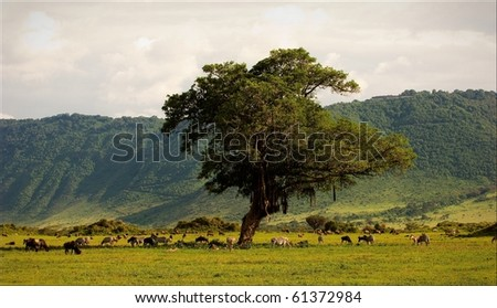 In a crater of Ngoro ngoro. A green landscape in a crater of Ngoro ngoro with grazed zebras and antelopes. - stock photo