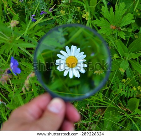 In a hand magnifier, through which we see the flower chamomile - stock photo