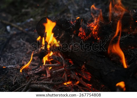 in a pine forest fire burning branches and trees macro shooting fire - stock photo