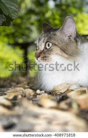 In autumn the foliage is dry white with a brown cat. - stock photo