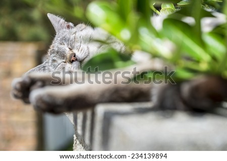 In background focus on the head of an adult tabby cat sleeping lengthened on a low wall. Portrait of domestic cat. Color image - stock photo