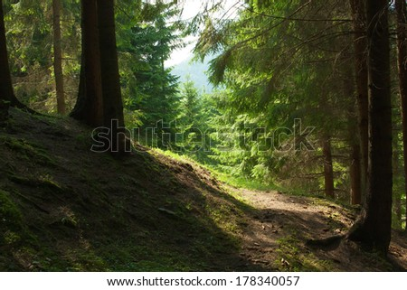 In forest. landscape of the Carpathian Mountains, Ukraine.