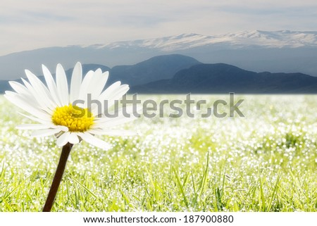 in front a flower and in the background tiroler mountains - stock photo