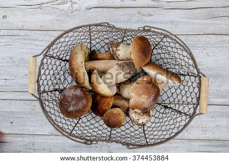 In German Forest Collected Fresh Porcino or Porcini Mushrooms in Autumn - stock photo