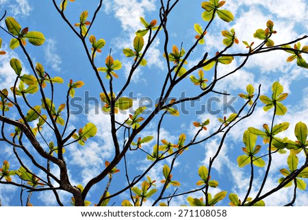 In harmony : glowing green leaves on tree framing blue sky with cloud at background. - stock photo