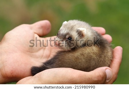 In human hands - stock photo