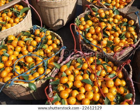 In orange harvest season,farmer took the fresh orange to the market by shoulder pole for sell. - stock photo